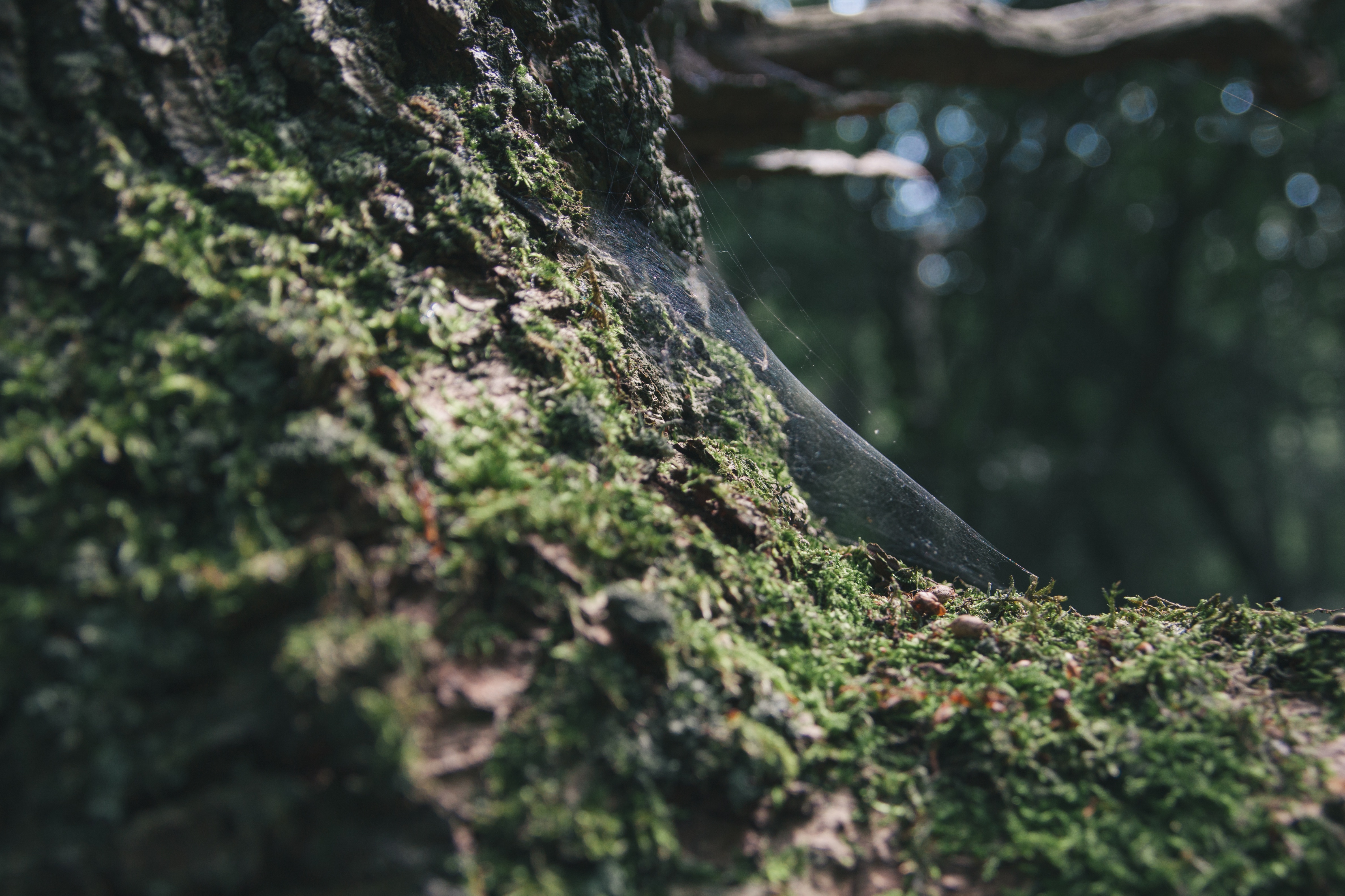 a close up of a tree